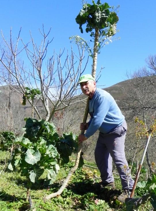 Mi Berza, el amor vegetal